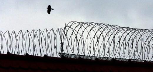 Vogel über der Knastmauer - Freiheit